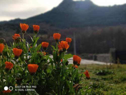 Flores y el Berrueco